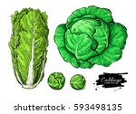 cabbage hand drawn... | Shutterstock . vector #593498135