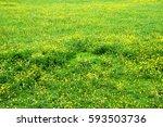 buttercup meadow. a summertime... | Shutterstock . vector #593503736