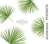 Tropical Palm Leaves. Vector...