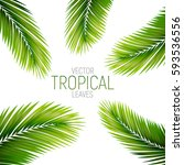 tropical palm leaves. vector... | Shutterstock .eps vector #593536556