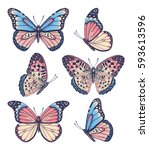 Stock vector vector vintage hand drawn set of beautiful colorful butterflies on a white background 593613596