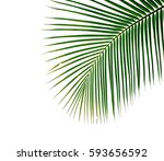 palm leaves isolated on white... | Shutterstock . vector #593656592