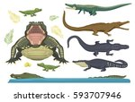 cartoon green crocodile danger... | Shutterstock .eps vector #593707946