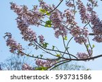 beautiful blooming flowers of... | Shutterstock . vector #593731586