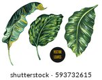 tropical leaves  banana leaf... | Shutterstock .eps vector #593732615