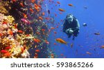 scuba diver and coral reef with ... | Shutterstock . vector #593865266