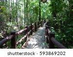 walk way in forest background.   Shutterstock . vector #593869202