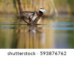 duck swimming in lake. cute... | Shutterstock . vector #593876762