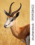 proud springbok in the etosha... | Shutterstock . vector #593928422