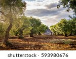 trulli with olive grove. val d... | Shutterstock . vector #593980676