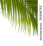 Palm Fronds Against White...