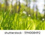 summer field   Shutterstock . vector #594008492