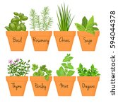 set of vector culinary herbs in ... | Shutterstock .eps vector #594044378