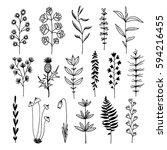 botanical doodle illustration ... | Shutterstock .eps vector #594216455