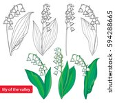vector set with outline lily of ... | Shutterstock .eps vector #594288665