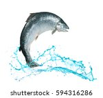 atlantic salmon fish jumping... | Shutterstock . vector #594316286