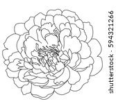 graphical black and white peony ... | Shutterstock .eps vector #594321266