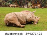 White Rhinoceros Or White Rhin...