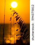 Sunset Through Sea Grass Orang...