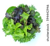 Green Lettuce Isolated ...