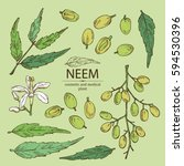 collection of neem  leaves and...   Shutterstock .eps vector #594530396