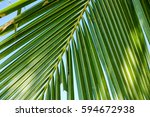 green leaf of coconut palm tree | Shutterstock . vector #594672938