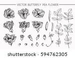 drawing flowers. vector... | Shutterstock .eps vector #594762305