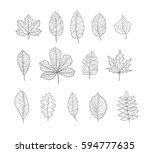 hand drawn leaves contours set. ... | Shutterstock .eps vector #594777635