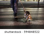 Stock photo man with a dog crossing the street 594848522