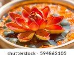 Nelumbo Flower Known As Lotus....