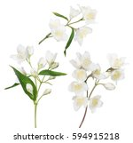 jasmin branches with flowers... | Shutterstock . vector #594915218