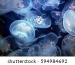 Blue Jellyfish Medusa In...