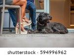 Black Schnauzer Dog Lying At...