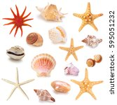 Collection Different Seashells Isolated White - Fine Art prints