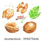 watercolor illustration of... | Shutterstock . vector #595075646