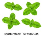 fresh raw mint leaves isolated | Shutterstock . vector #595089035