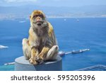 Small photo of monkey in Gibraltar, Barbary Ape sitting, monkey in the British overseas territory, gibraltar, Gibraltar monkey sitting against scenic seascape, mammals in britain, wildlife in gibraltar