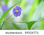 beautiful green scenery with a blue flower - stock photo
