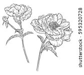 set of two drawn with ink...   Shutterstock .eps vector #595320728
