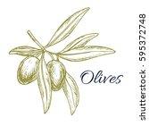 olive sketch poster. green... | Shutterstock .eps vector #595372748