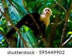 capuchin monkey. manuel antonio ... | Shutterstock . vector #595449902