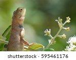 lizard   Shutterstock . vector #595461176