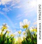 art spring tulip flower on blue ... | Shutterstock . vector #595625192