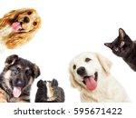 Stock photo set pet peeping on a white background 595671422
