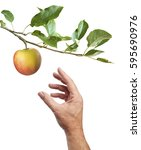 Picking An Apple. Male Hand Is...