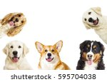 Stock photo portrait of a dog looking at the camera on a white background 595704038