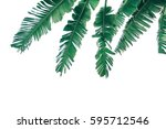 green banana leaf isolated on... | Shutterstock . vector #595712546
