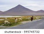 altiplano lake salar de uyuni... | Shutterstock . vector #595745732