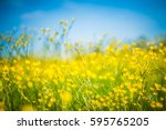 closeup summer nature landscape.... | Shutterstock . vector #595765205