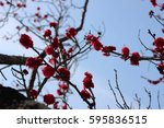 pink flower of plum | Shutterstock . vector #595836515